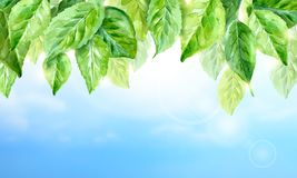 Horizontal watercolor background of spring leaves. Stock Photos