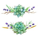 Horizontal watercolor sets of succulents, leaves and old branches. For invitations, greeting cards, covers, frames. Banner royalty free illustration