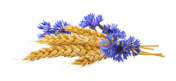 Horizontal wheat cornflower isolated composition stock photography