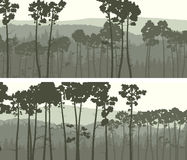 Horizontal wide banners of coniferous pinewood. Stock Images