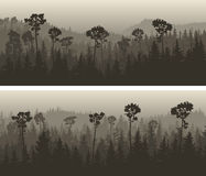 Horizontal wide banners of coniferous wood. Royalty Free Stock Image