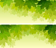 Horizontal wide banners of maple tree crown. Stock Photography