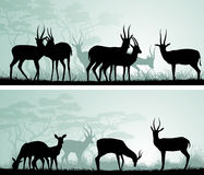 Horizontal wide banners of wild antelope in African savanna. Royalty Free Stock Photo
