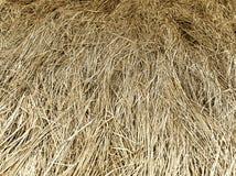 Horizontal yellow hay texture background Stock Images