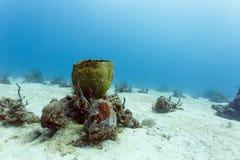 Horizontale Ansicht der Nahaufnahme des fetten Fassschwammes auf Meeresgrund in Karibischen Meeren Stockbilder