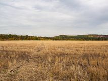 Horizontale Ansichten eines Feldes mit Stoppel, Herbstlandschaft mit Wald auf Skylinen und drastischem Himmel Natur, ländliche An Stockfotografie