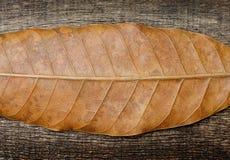 Horizontale droge bladeren op oude houten achtergrond Royalty-vrije Stock Foto