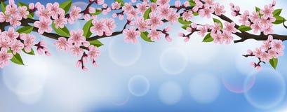 Horizontale Fahne mit realistischem Kirschbaum mit Blumen und Blättern Stockbilder