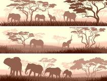 Horizontale Fahnen von wilden Tieren in der afrikanischen Savanne. Stockbilder