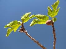 Horizontale fig. - Stock Afbeeldingen