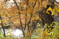 Horizontale foto van dalings oranje bomen & struiken royalty-vrije stock afbeelding
