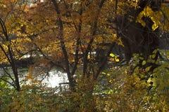 Horizontale foto van dalings oranje bomen & struiken voor water stock foto's