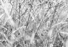Horizontale heldere zwart-witte dramatische takken bokeh Royalty-vrije Stock Afbeeldingen