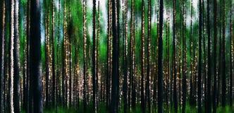 Horizontale levendige bos houten abstractieachtergrond Stock Afbeeldingen