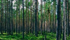 Horizontale levendige symmetrische bos houten samenstellingsachtergrond Stock Fotografie