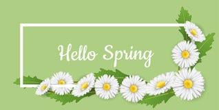 Horizontaler Fahnenrahmen mit Blumen des weißen Gänseblümchens Stockfotos