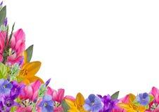 Horizontaler Rahmen von Blumen und von Blättern mit in der Ecke der untereren Linke Stockfotos