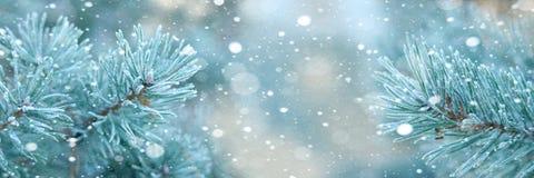 Horizontaler Weihnachtshintergrund mit Kiefernniederlassungen und -schnee Stockbild