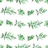 Horizontales Grün des nahtlosen Musters verlässt auf einem weißen Hintergrund watercolor Lizenzfreies Stockfoto