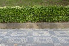 Horizontales Muster der Straße und der Hecke lizenzfreies stockfoto