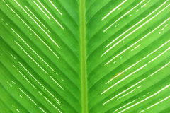 Horizontales Muster des Blattes vom Baum Lizenzfreies Stockbild