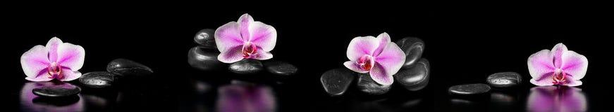 Horizontales Panorama mit rosa Orchideen und Zensteinen Lizenzfreie Stockfotografie