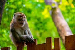 Horizontales Porträt eines Affen auf einem Zaun Stockfoto