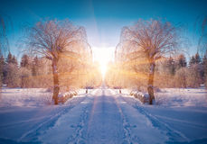 Horizontally flipped winter landscape in the city park Stock Photo
