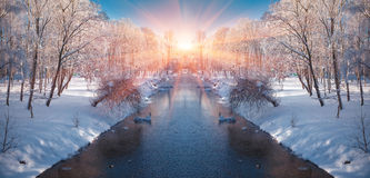 Horizontally flipped winter landscape in the city park. Royalty Free Stock Images