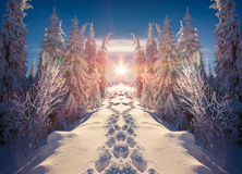 Horizontally flipped winter landscape in the mountains. Stock Photo