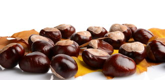 Horizontally many chestnuts with autumn leaves on white background Stock Images