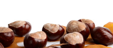 Horizontally many chestnuts with autumn leaves on white background Royalty Free Stock Photos