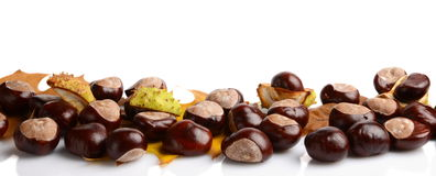 Horizontally many chestnuts with autumn leaves on white background Stock Photos