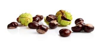 Horizontally many chestnuts isolated on white background Stock Photos