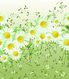 Horizontally repeating pattern of large and small daisies. With leaves and stems on a white green background. Summer garden with chamomile flowers royalty free illustration