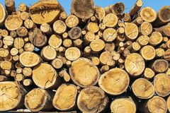 Horizontally stored logs. Ready for distribution Royalty Free Stock Photo