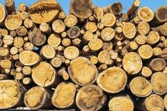 Horizontally stored logs Royalty Free Stock Photo