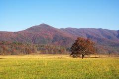 Horizontaux colorés de montagne dans l'automne Photo stock
