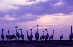 Horizontaux de faune image stock