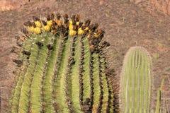 Horizontaux de Mexicain de désert Photos libres de droits