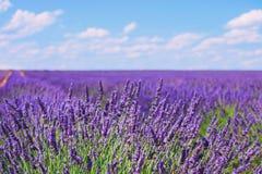 Horizonte de florescência dos campos da flor da alfazema Valensole Provence, Fra foto de stock