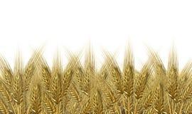 Horizonte de la cosecha del trigo Foto de archivo libre de regalías