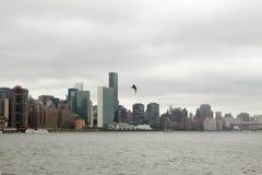 Horizonte de NYC con la gaviota imagen de archivo libre de regalías