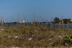 Horizonte de Sarasota a través de la hierba Foto de archivo libre de regalías