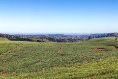 Horizonte de Sugar Cane Field Against Urban City Imágenes de archivo libres de regalías