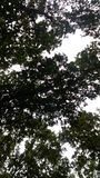 Horizonte del bosque Fotografía de archivo
