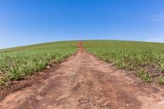 Horizonte del camino de tierra de la ladera de la granja Foto de archivo