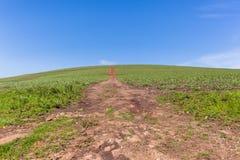 Horizonte del camino de tierra de la ladera de la granja Imagen de archivo libre de regalías