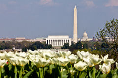 Horizonte del Washington DC con los tulipanes Imagenes de archivo
