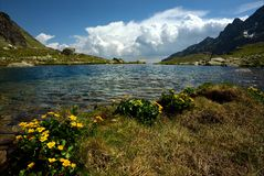 Horizonte do lago mountain com flores amarelas Fotos de Stock Royalty Free